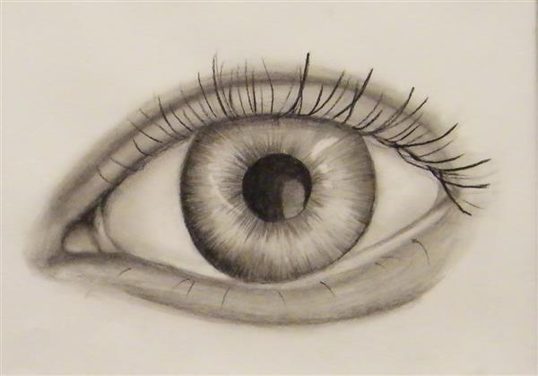 ALyons Beauty of Human Sight