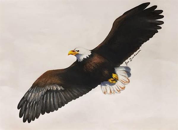 LDanhauer American Bald Eagle
